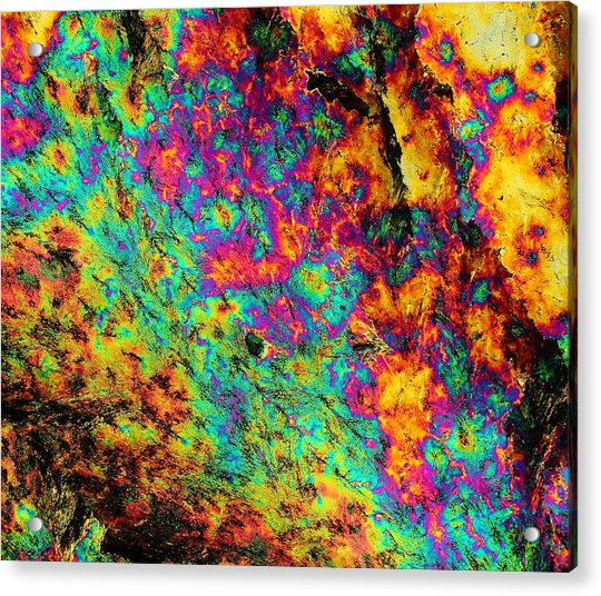 Mandrake Root Acrylic Print