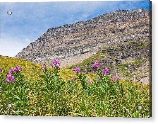 Meadow Of Fireweed Below The Continental Divide Acrylic Print