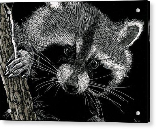 Meeko Acrylic Print