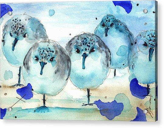 Meet The Sanderlings Acrylic Print
