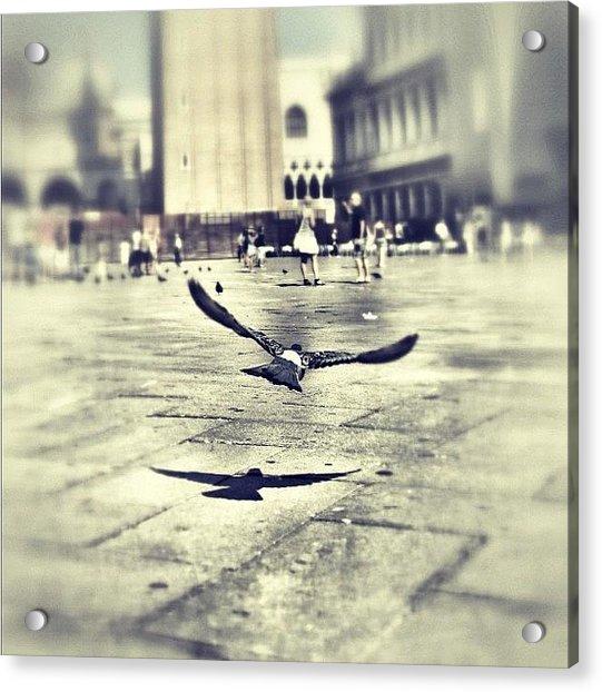 #mgmarts #bird #nature #flying #fly Acrylic Print