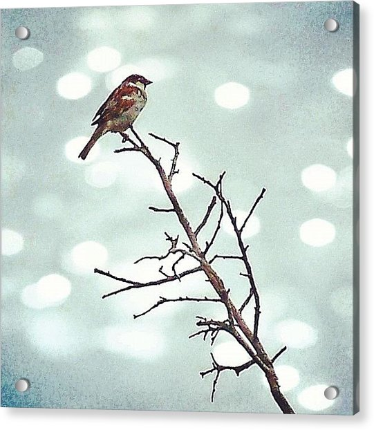 #mgmarts #bird #nature #life #bestpic Acrylic Print