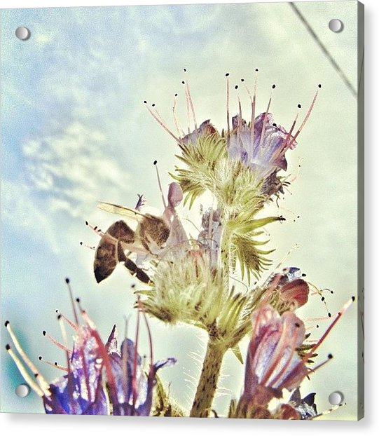 #mgmarts #flower #spring #summer #bee Acrylic Print