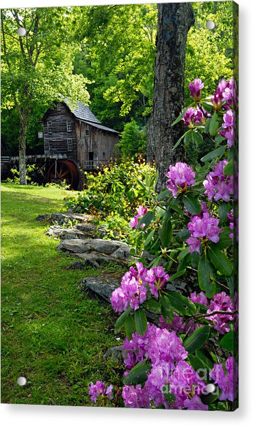 Mill And Rhododendrons Acrylic Print
