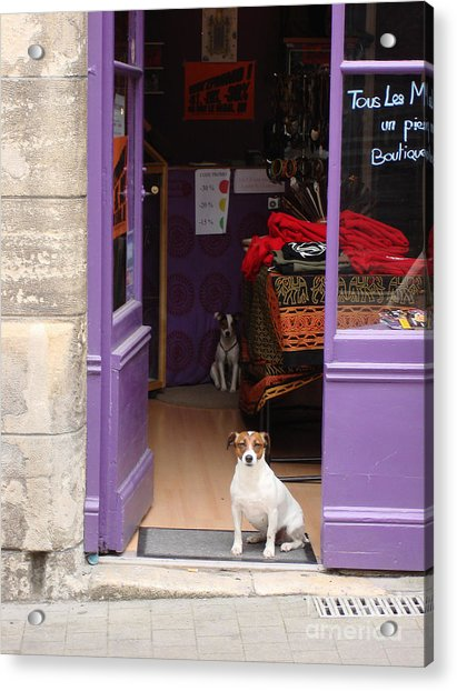 Minding The Shop. Two French Dogs In Boutique Acrylic Print