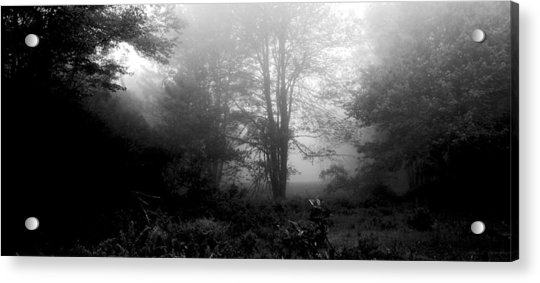 Misty Morning With Tree Silhouettes Acrylic Print