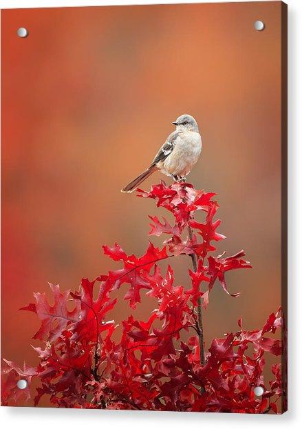 Mockingbird Autumn Acrylic Print