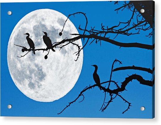 Moonlit Cormorants Acrylic Print by Donna Pagakis