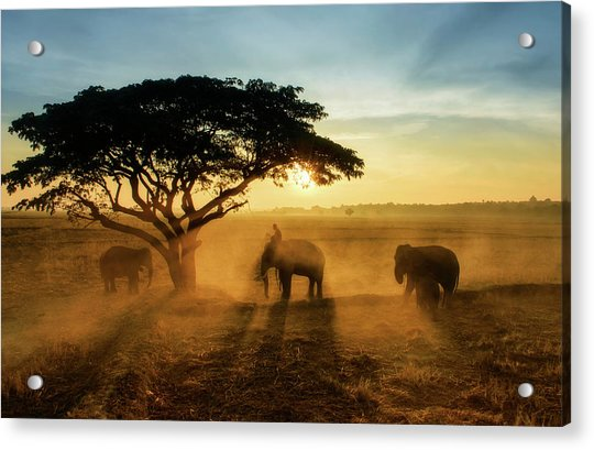 Morning Elephant Home Town Acrylic Print by Saravut  Whanset