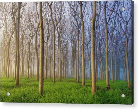 Morning Of The Forest Acrylic Print