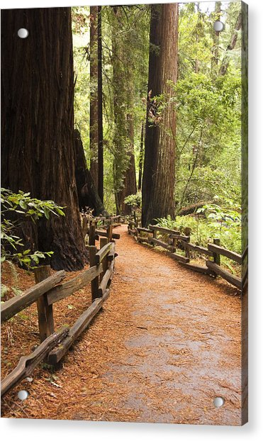 Muir Woods Trail Acrylic Print