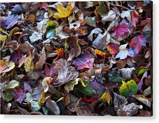 Acrylic Print featuring the photograph Multicolored Autumn Leaves by Rona Black