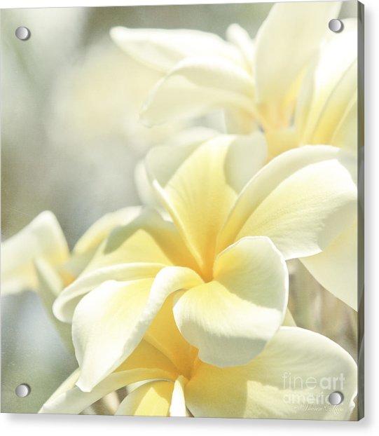 Na Lei Pua Melia Aloha E Ko Lele Acrylic Print