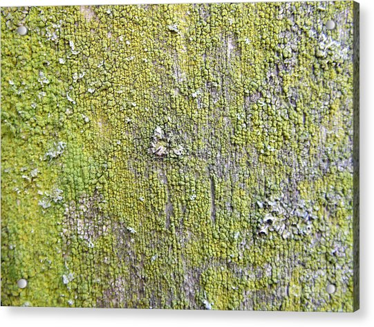 Natural Abstract 1 Old Fence With Moss Acrylic Print