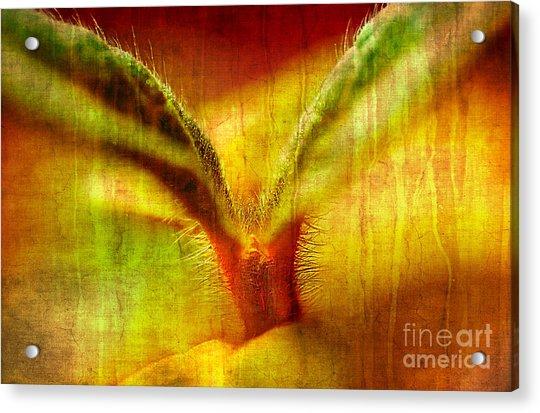 New Growth Acrylic Print