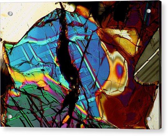 Rock Tortoise Acrylic Print