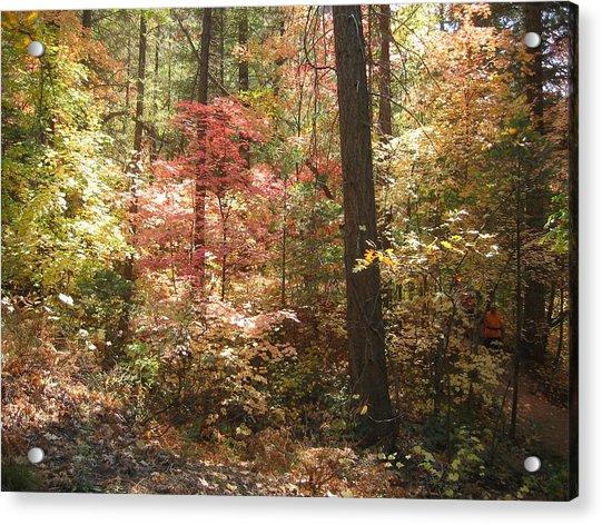 Oak Creek Arizona Fall Foliage Acrylic Print