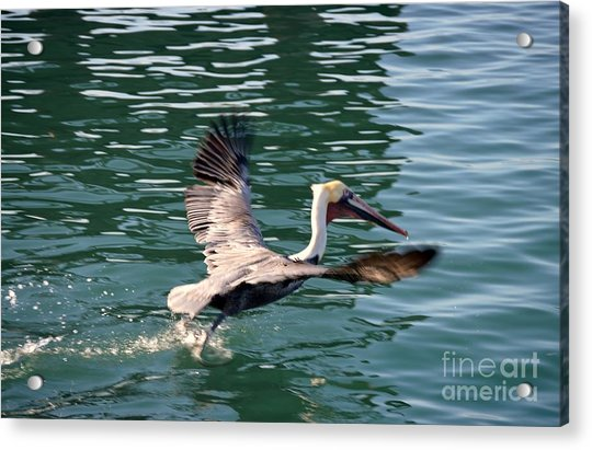 Acrylic Print featuring the photograph Oceanside  by Laurie Lundquist