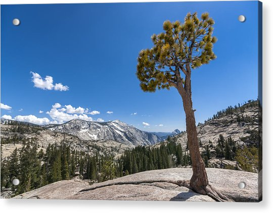 Olmsted Point Yosemite Acrylic Print