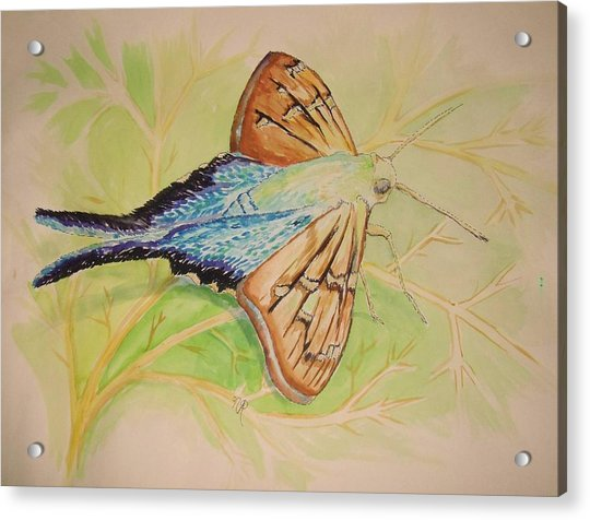 One Day In A Long-tailed Skipper Moth's Life Acrylic Print