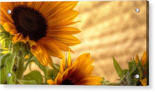 Orange Burst - Sunflower - Mike Hope Acrylic Print