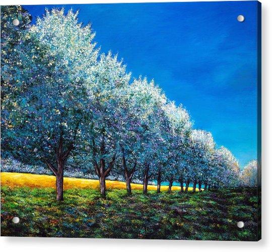 Orchard Row Acrylic Print