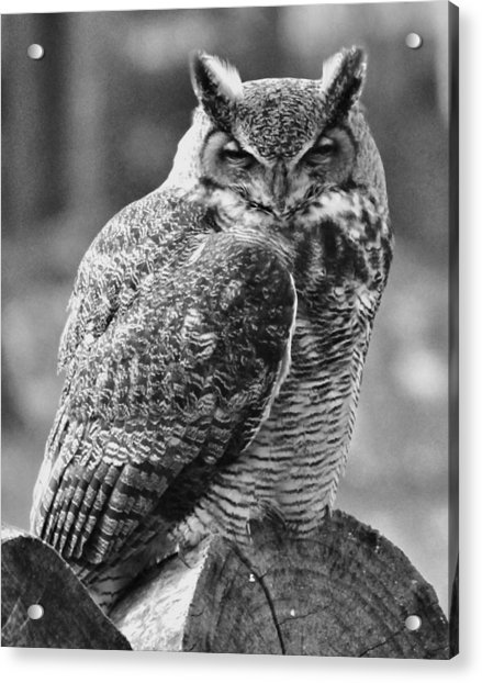 Owl In Black And White Acrylic Print