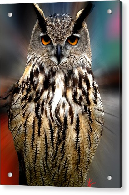 Acrylic Print featuring the photograph Owl Living In The Spanish Mountains by Colette V Hera  Guggenheim