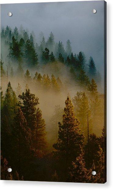 Pacific Northwest Morning Mist Acrylic Print