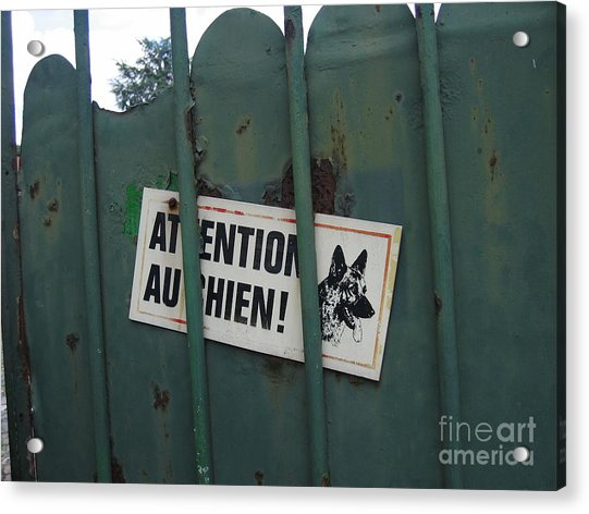 Paris - Farm Dog Acrylic Print