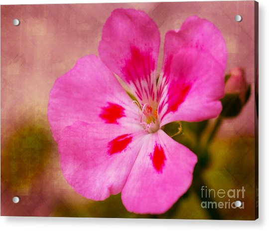 Pastel Beauty Acrylic Print