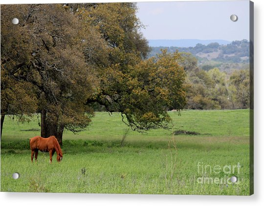 Peace In The Hill Country Acrylic Print