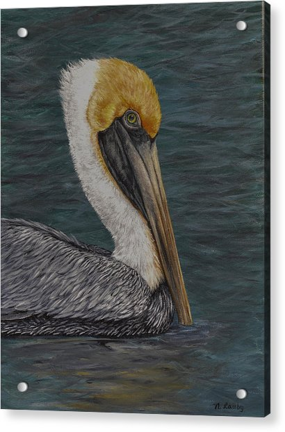 Pelican Floating In The Bay Acrylic Print