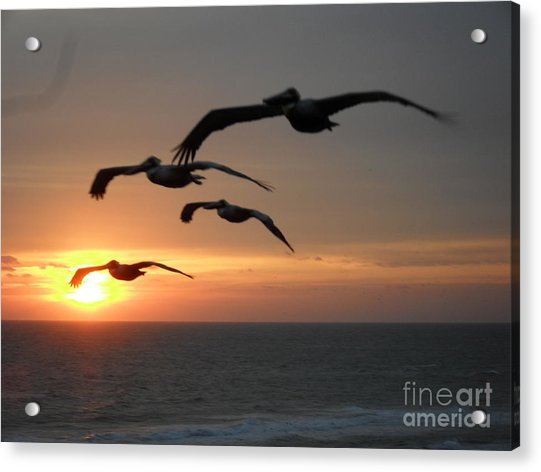 Pelican Sun Up Acrylic Print
