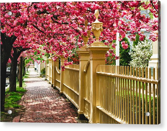 Perfect Time For A Spring Walk Acrylic Print