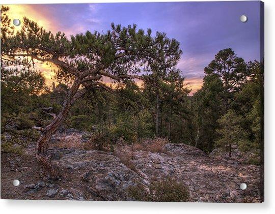 Acrylic Print featuring the photograph Petit Jean Mountain Bonsai Tree - Arkansas by Jason Politte