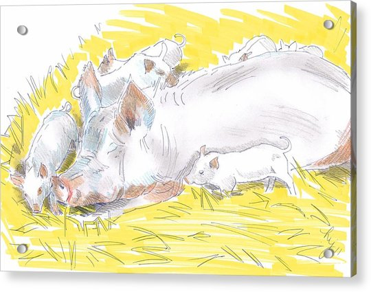 Pig Sow And Piglets Acrylic Print