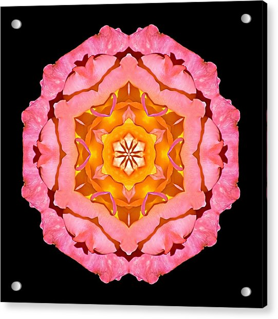 Pink And Orange Rose I Flower Mandala Acrylic Print
