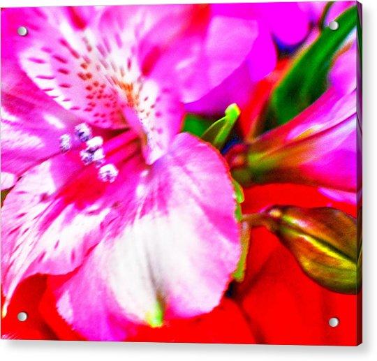 Pink Bouquet Acrylic Print