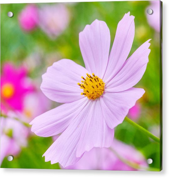 Acrylic Print featuring the photograph Pink Flower  by Garvin Hunter