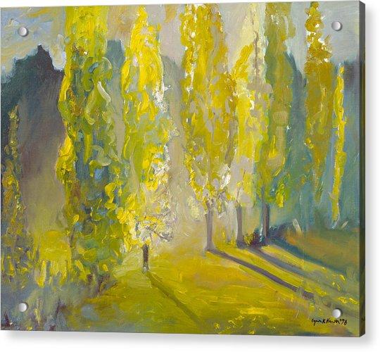 Poplars In The Morning Acrylic Print