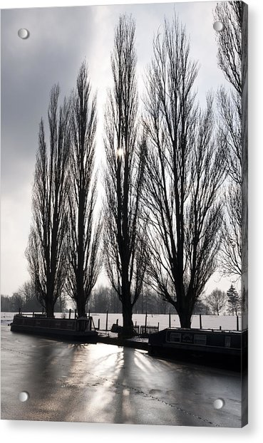 Poplars In Winter Acrylic Print