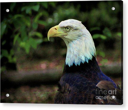 Profile Of America Acrylic Print