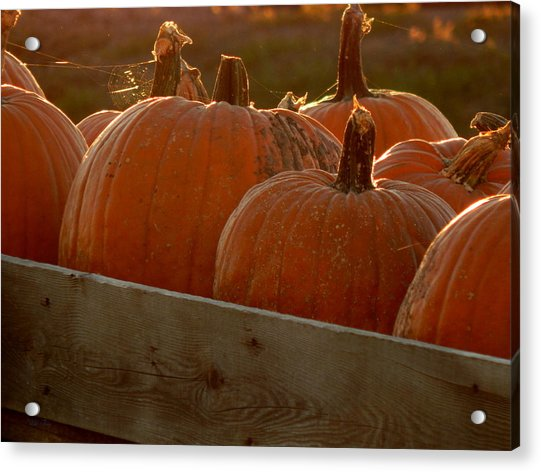 Pumpkin Webbed Light Acrylic Print