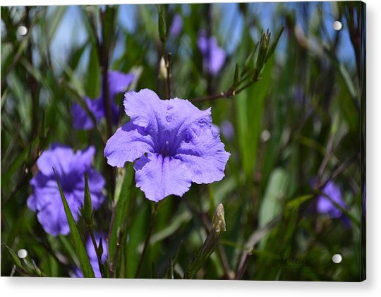 Purple Wild Flower Acrylic Print