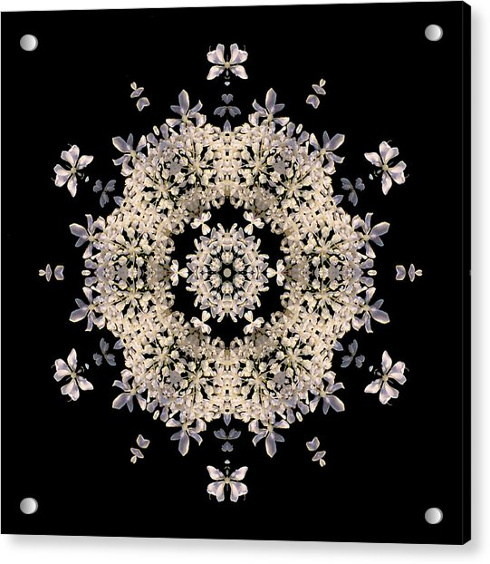 Queen Anne's Lace Flower Mandala Acrylic Print