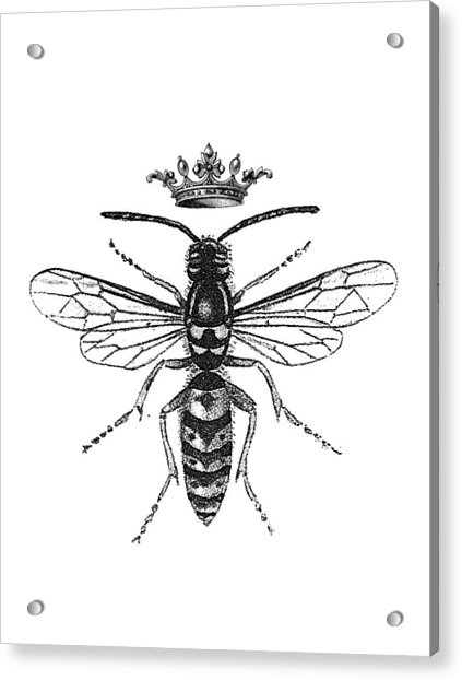 Queen Wasp Acrylic Print