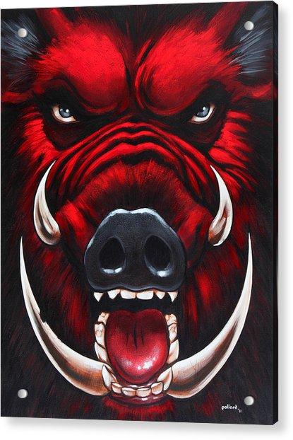 Raging Hog Acrylic Print
