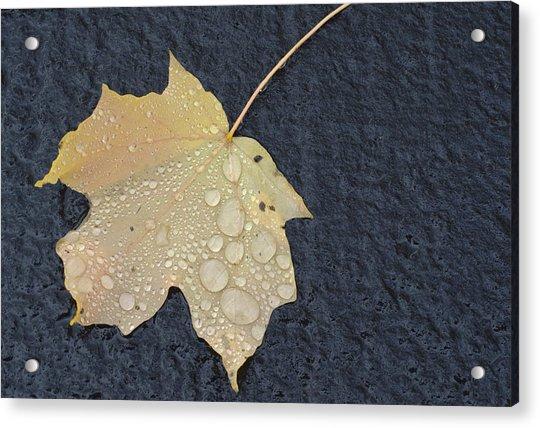 Rain Drops On A Yellow Maple Leaf Acrylic Print