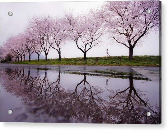 Rain Of Spring Acrylic Print